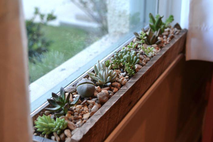 15 beautiful window plants ideas that will freshen up your house 1 - 15 beautiful window plants ideas that will freshen up your house